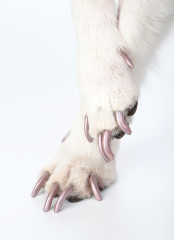 Nail Art for Dogs?