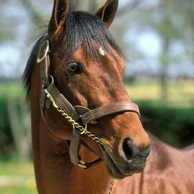 Kentucky Derby Horse or Nail Polish Color?
