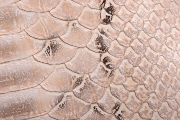 Tatiana Grigorash drew inspiration for the third design from the rough texture of snake skin prints. | Second Skin: 3 Snake Skin Nail Art Tutorials; check them out at http://www.nailpro.com/snake-skin-nail-art-tutorials