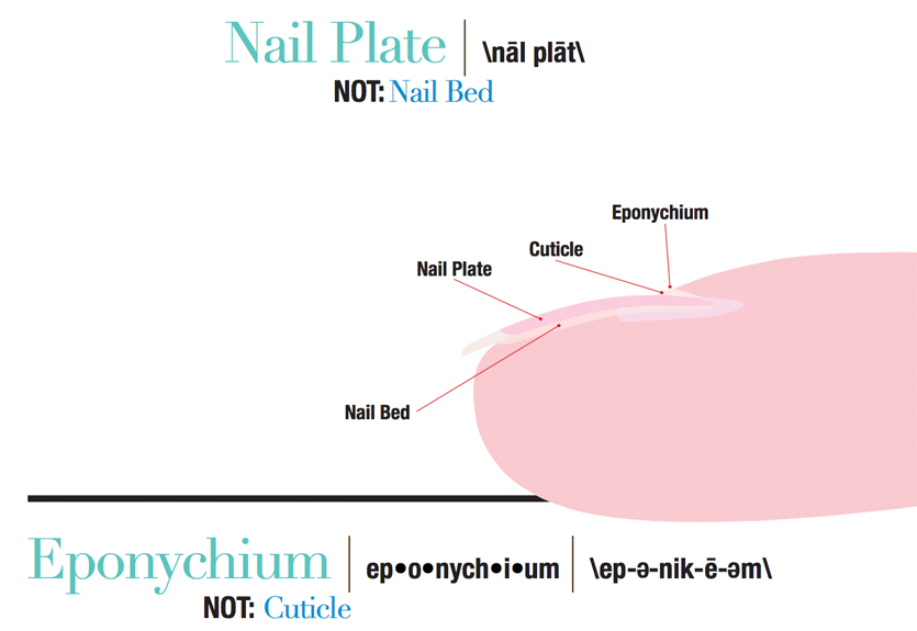 Correct Terminology To Use When Communicating With Your Nail Clients